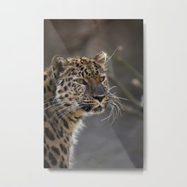 Whats On A Cats Mind Metal Print