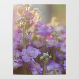 Sunlit Purple Stock Poster