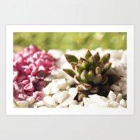 Succulent Pink Terrarium Art Print