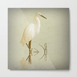 Little Egret 2 Metal Print
