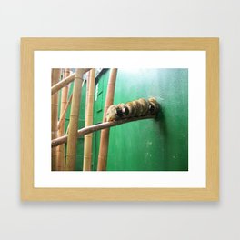 Monkeys in a row Framed Art Print