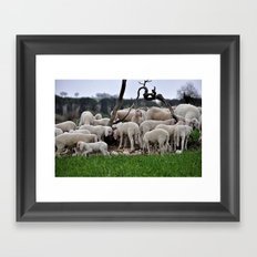 Sheep 2 Framed Art Print