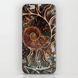 Fossilized Shell iPhone Skin