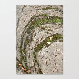 Mossy Stone Curves Canvas Print