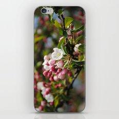Apfelblüten  iPhone & iPod Skin