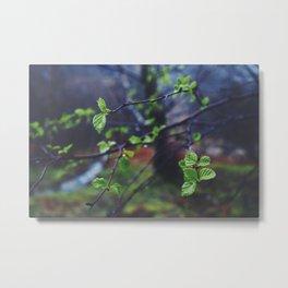 Highland Spring Metal Print