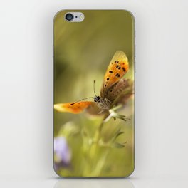 Morning impression with orange butterfly iPhone Skin