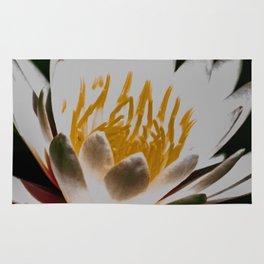 Aquatic royal flower Rug
