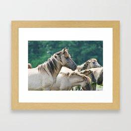 A herd of Brumby Horses from Australia Framed Art Print