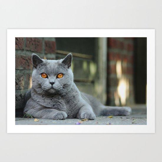 Diesel the cat ! Art Print