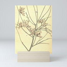 Flower 683 spartium monospermum White Single seeded Broom10 Mini Art Print