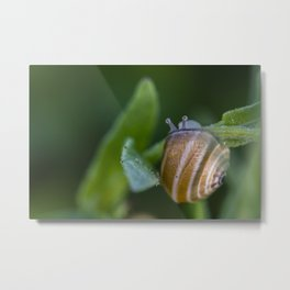 Snail on green Metal Print