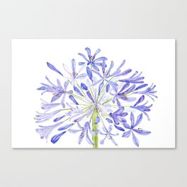 blue purple African lily watercolor painting Canvas Print
