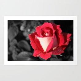Fall Rose Art Print