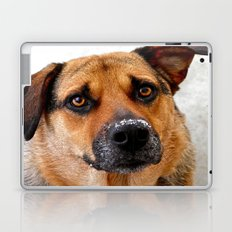 My Nose is Cold Laptop & iPad Skin