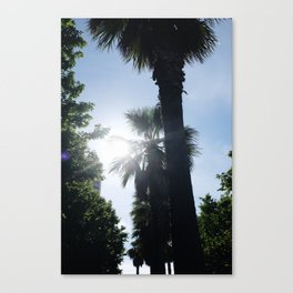 Palm Obsession Canvas Print