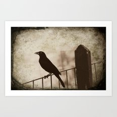 Blackbird 1 Art Print