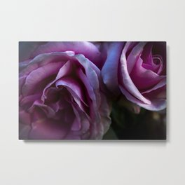 Twin rose buds Metal Print