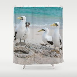 Masked Boobies on a beach Shower Curtain