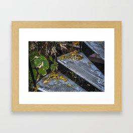 Autumn Steps Framed Art Print