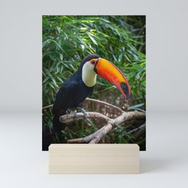 A toucan laid on a tree branch in the forest Mini Art Print