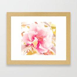 camellia I Framed Art Print
