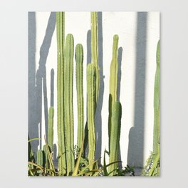 cali cacti Canvas Print