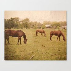 Three Horses Grazing.  Horse Photograph.  Landscape and Nature Photo. Wisconsin Canvas Print