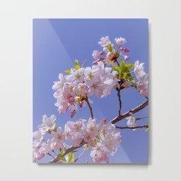 Apple Blossoms II Metal Print