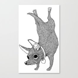 Chihuahua Handstand Canvas Print