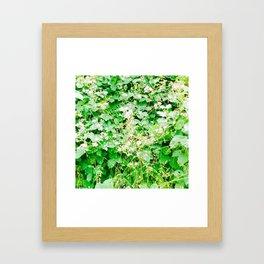Flowering Briars Framed Art Print