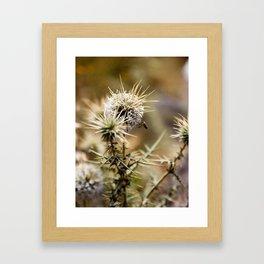 Moroccan Bee Framed Art Print