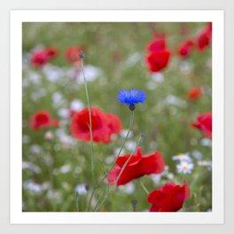 Spring Meadow Poppy Flowers full Bloom Art Print