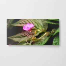 WILD FLOWER WILD FLOWER Metal Print