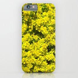 Yellow flowering Shrubs Golden Template Woadwaxen iPhone Case