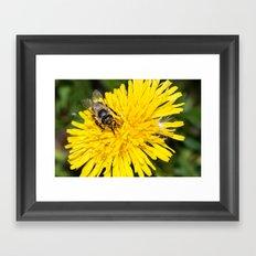 Bees tongue Framed Art Print