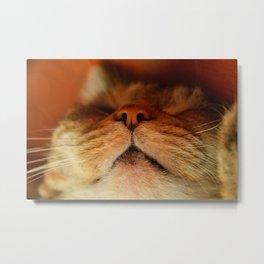 torbie cat Metal Print