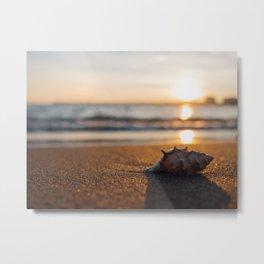 Seashore Seashell Metal Print