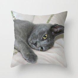 Russian Blue Kitten Relaxed On A Bed Throw Pillow