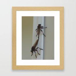 Robber flies in love III Framed Art Print