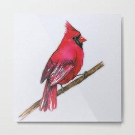 A Northern cardinal watercolor Metal Print