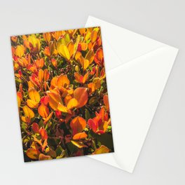 closeup orange leaves plant texture background Stationery Cards