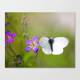 White Butterfly Natural Background Canvas Print