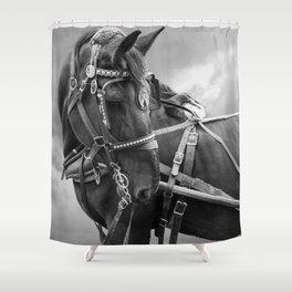 Horse Photography | Animal Art | Mammal | Nature | Wildlife | Black and White Stallion Shower Curtain