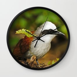 White-crested Laughingthrush Wall Clock