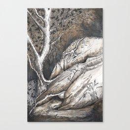 Dolphin Rocks, Summerhill Glen. Canvas Print