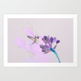 Hummingbird with purple flower watercolor Art Print
