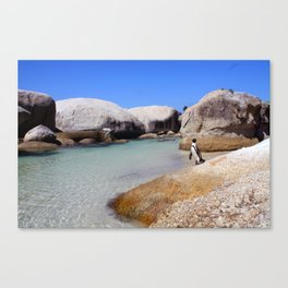 Swimming with Penguins Canvas Print