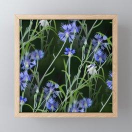 Cornflowers on Dark Background #decor #society6 #buyart Framed Mini Art Print
