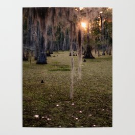 Witch's Hair at Sunrise on the Swamp Poster